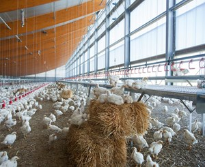 Case Study - Windstreek Broiler House